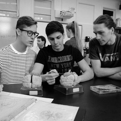 Trois étudiants observent une réplique de cerveau